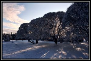 The wintery park by Skycode