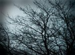 Cold Day in the Trees by Stumm47