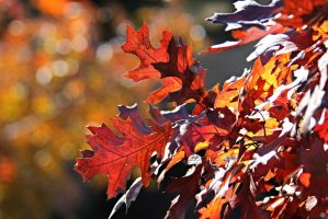 Red Leaves by Monkeystyle3000
