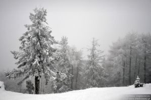 Whitescape by Dhante