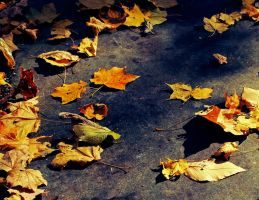 Fall by Warbus23