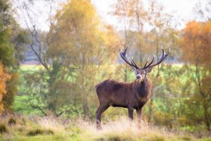 Stag 133-12-14 by lomoboy