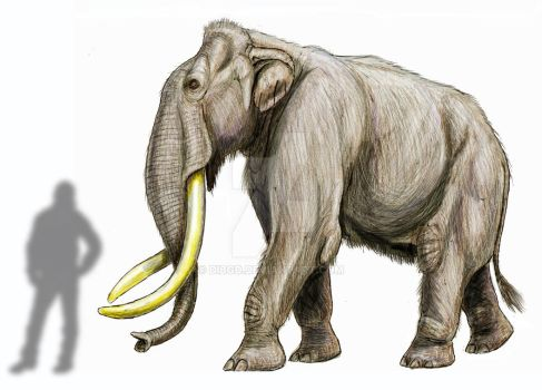 Taman' s mammoth by DiBgd