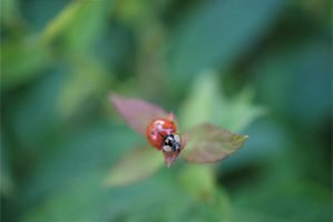 Lady Bug by trainsstuff