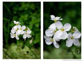 White Flowers by Kimiko-chan1