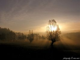 Misty Morning by Cassiopea71