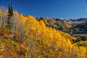 The Big Cottonwood Road by mjohanson