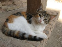 Alhambra Cat by musicalcat