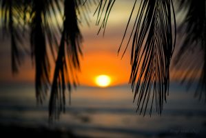 Bokeh Sunsets by quandom2