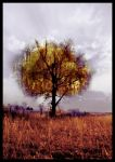 the colors of autumn by ribcage-menagerie