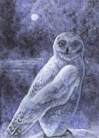 Snow Owl ACEO by Ferluner
