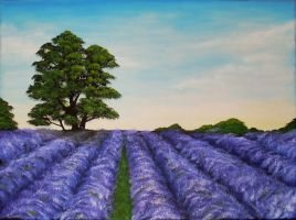 Lavender field by georgmaxklein