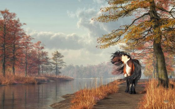 Pinto Horse on a Riverside Trail by deskridge