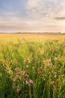 Meadow in dawn's light by padika11