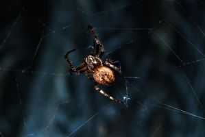 little spider by Jester-Genso