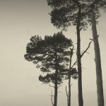 Trees II by lostknightkg