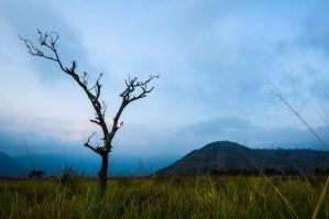 Lonesome tree by SantiBilly