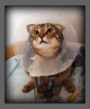 Will I get well... by hoschie