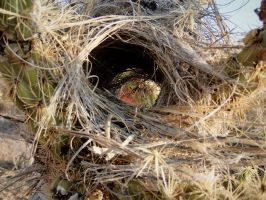 See Through Nest Self Portrait by ClymberPaddler