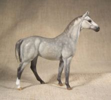Grey Thoroughbred custom by ymagier