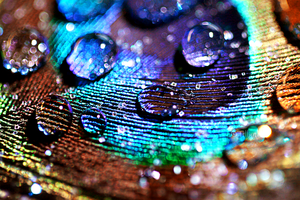 Peacock feather macro II by ShirleysStudio