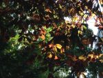 leaves by CuffButtons