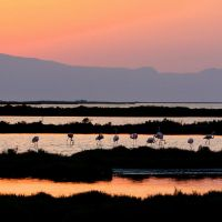 flamingoes at sunset II by matricaria72