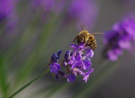 The bee by Mavali