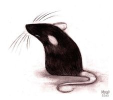 Rat by sketchinthoughts