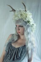 deer antler fantasy stock 1 by Liancary-Stock