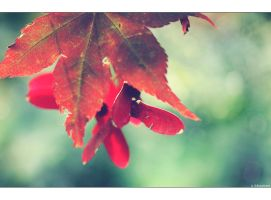 Autumn's Colours by Limaria