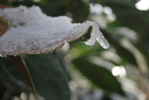 Ice leaves by ImmortalEmotion