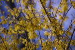 Yellow Flowers by Evangilyna