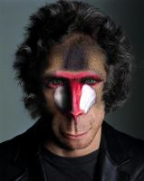 Ben Stiller Mandrill by bruno-sousa