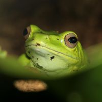 Tree Frog  2 by s-kmp