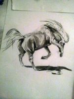 horse by Cocolie