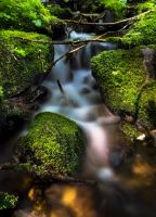 Mossy Falls by jasonwilde