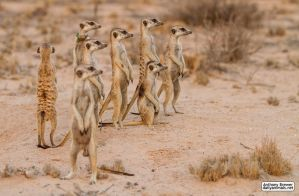 One in every crowd by jaffa-tamarin
