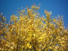 The Autumn Gold 08 by faelivrinen-stock