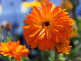 Orange Flowers 2 by crazyal154