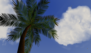 Palm Tree by Golloperaa