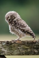 Lonely Owl by littlelostsoldier