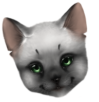 cat face WIP (speed paint) by nevaeh-lee