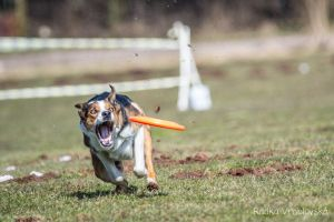 Crazy border collie by aussiefoto