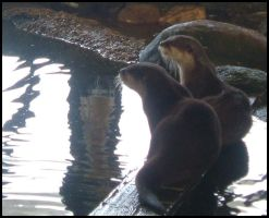 :Otters: by charliemalfoy