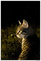 .cat. by theartr
