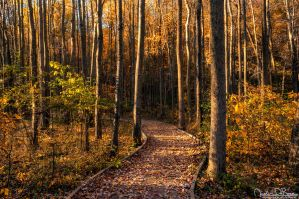 A Little Slice Of Autumn by JustinDeRosa
