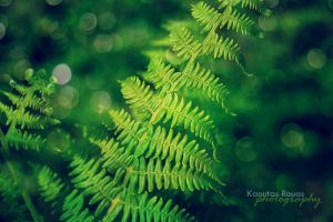green passion by mydecember90