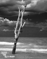 The Lone Tree by swampfoxinsc