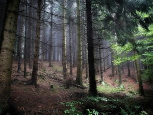 A Day In The Forest by Weissglut